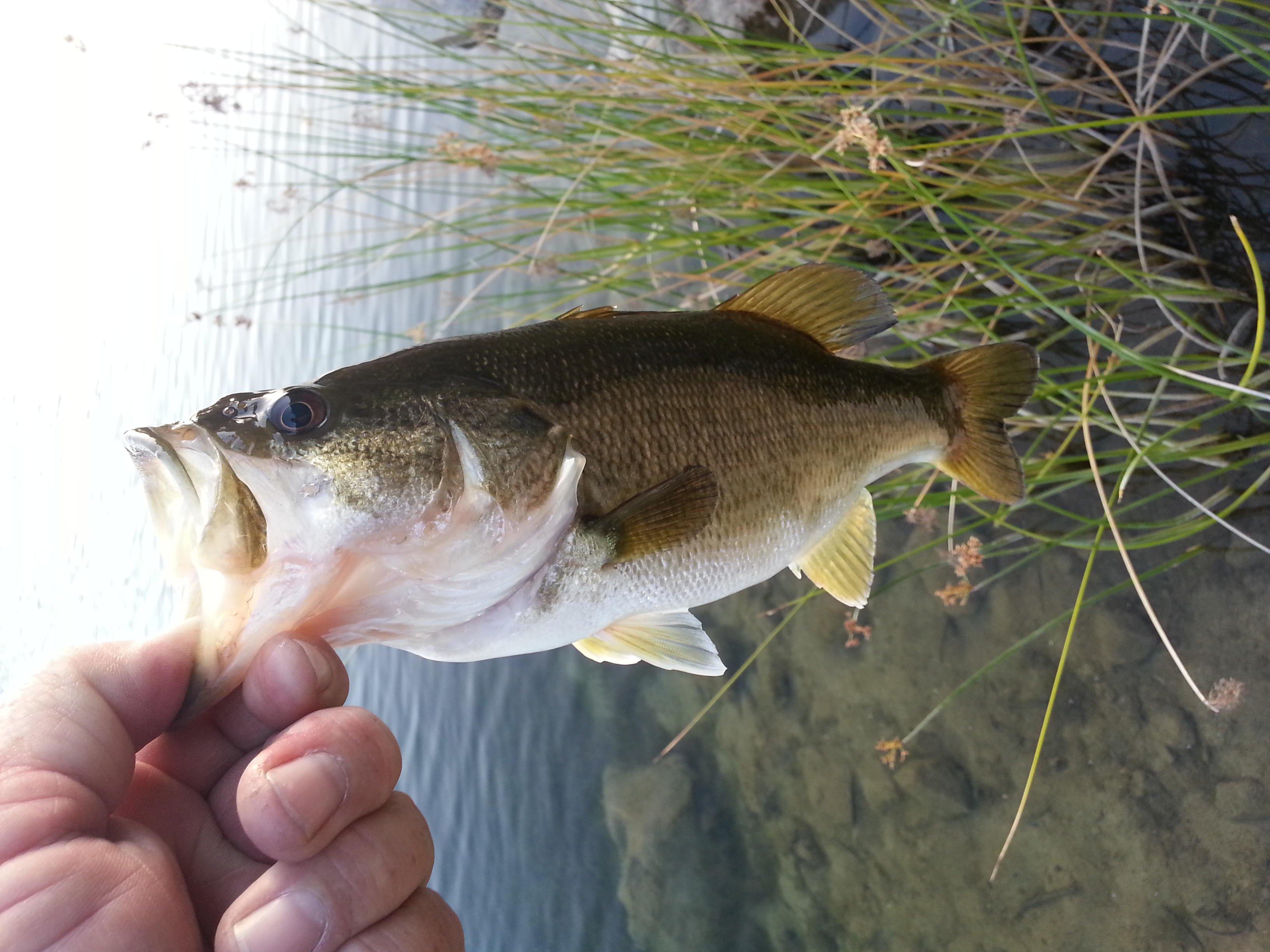 Click image for larger version  Name:bass 3-18-14 dixon lake #2.jpg Views:381 Size:625.7 KB ID:51641