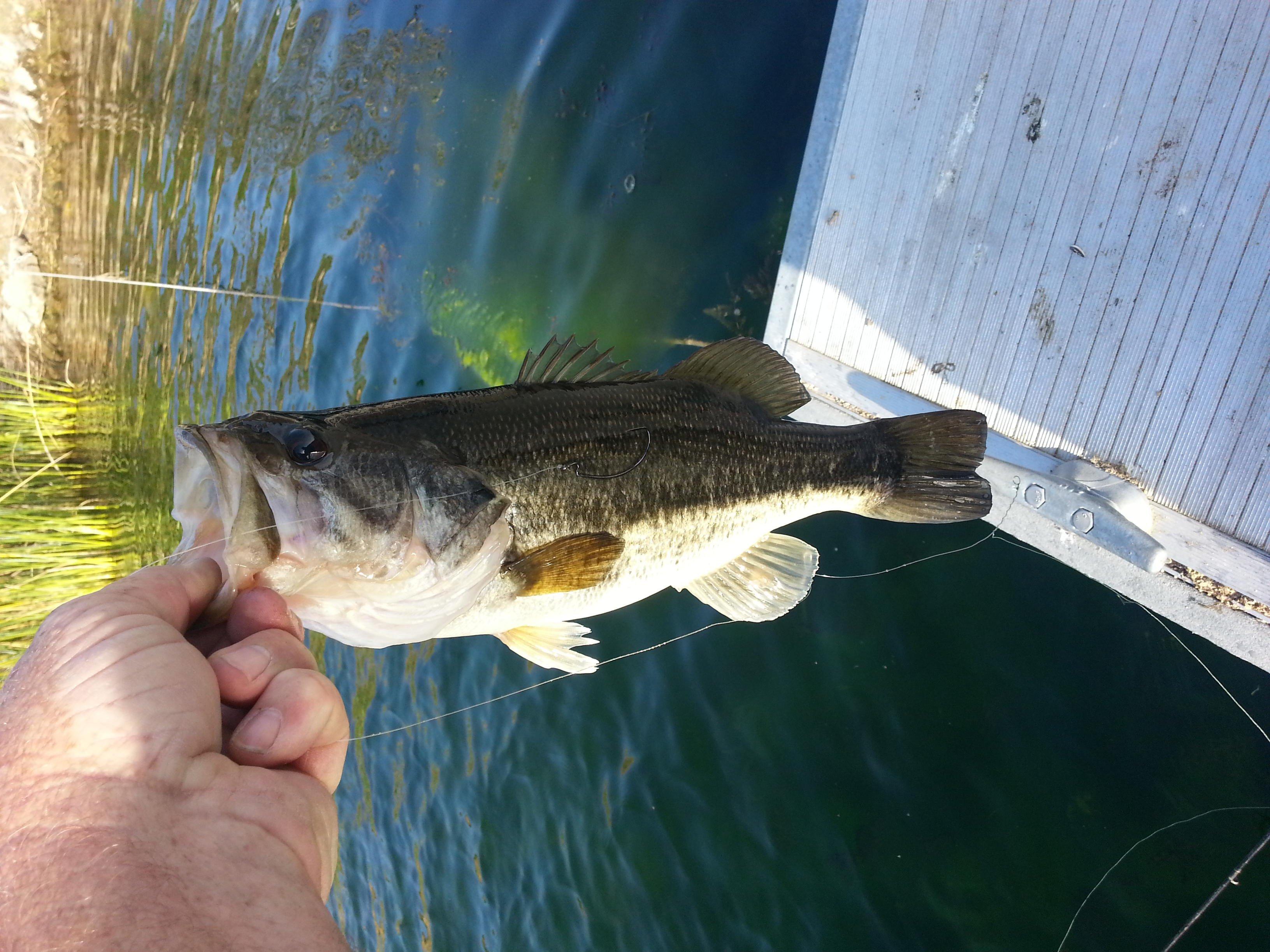 Click image for larger version  Name:bass 3-18-14 dixon lake #4.jpg Views:307 Size:807.5 KB ID:51657