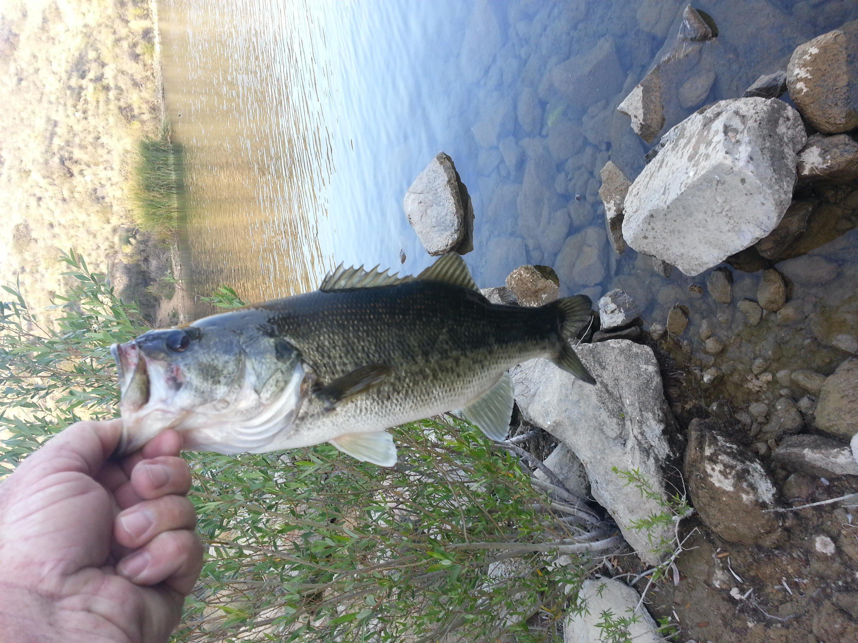 Click image for larger version  Name:bass 3-18-14 dixon lake #5.jpg Views:342 Size:876.7 KB ID:51665